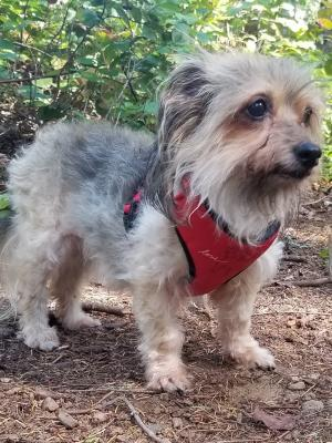 Victoria Adoptables | Local Dogs, Cats, & Small Animals for
