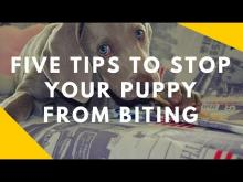 Embedded thumbnail for Five Tips To Stop Your Puppy From Biting You