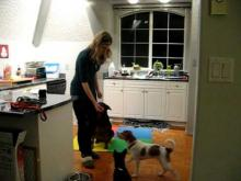 Embedded thumbnail for The Puppy Project Lesson 9 (Part 1): Training With Distractions - Too Much, Too Soon