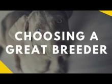 Embedded thumbnail for Picking a Great Breeder