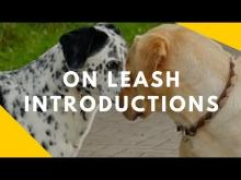 Embedded thumbnail for On Leash Intros