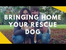 Embedded thumbnail for Bringing Home Your Rescue Dog
