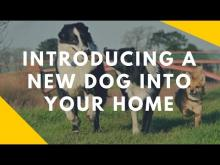 Embedded thumbnail for Introducing a New Dog Into Your Home