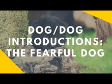 Embedded thumbnail for Fearful Dog Introductions
