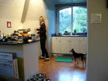 Embedded thumbnail for The Puppy Project Lesson 11: Cricket & The Popcorn Popper - Desensitizing Fear (Part 1/3)