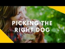 Embedded thumbnail for Picking the Right Dog