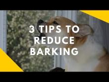 Embedded thumbnail for 3 Tips to Reduce Barking