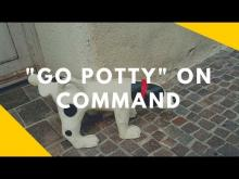 Embedded thumbnail for Teaching Your Dog to 'Go Pee' on Command