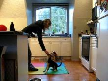 Embedded thumbnail for The Puppy Project Lesson 4: Training without Forethought - Not Always a Good Idea...