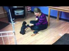 Embedded thumbnail for Puppy Class - Intro to 'Leave-it'