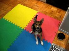 Embedded thumbnail for The Puppy Project Lesson 9 (Part 2) - Doable Distractions