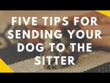 Embedded thumbnail for Five Tips for Sending Your Dog to the Sitter