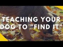 "Embedded thumbnail for Teaching Your Dog to ""Find It"""