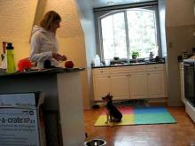 Embedded thumbnail for The Puppy Project Lesson 7: Establishing Appropriate Behaviour