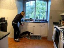 Embedded thumbnail for The Puppy Project Lesson 13: Food Bowl Exercises - Sitting When Approached (Part 2)