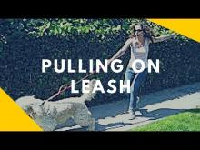 Embedded thumbnail for Pulling on Leash