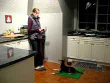 Embedded thumbnail for The Puppy Project Lesson 11: Cricket & The Popcorn Popper - Desensitizing Fear (Part 2/3)