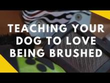 Embedded thumbnail for Teaching Your Dog To Like Being Brushed