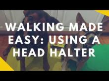 Embedded thumbnail for Walking Made Easy: Teaching Your Dog To Wear A Head Halter