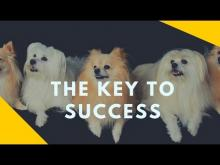 Embedded thumbnail for The Key to Successfully Training Your Dog