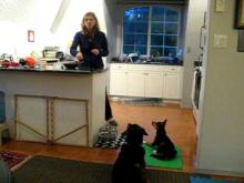 Embedded thumbnail for The Puppy Project Lesson 12: Managing Multiple Dogs at Feeding Time (aka Minimizing Chaos!)
